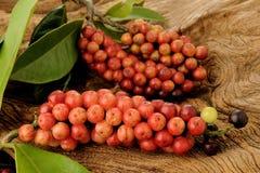 在木的泰国蓝莓 免版税库存图片