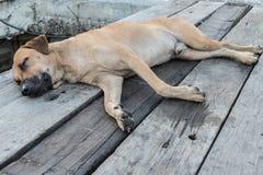 在木的狗睡眠 库存照片