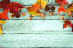 在木的葡萄酒的美丽的槭树叶子 库存照片