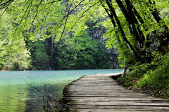 在木的路径附近的森林湖 图库摄影