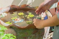 在木盆的哺养的鱼 免版税库存图片