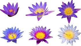 在木盆的紫色莲花,在水水池的紫色莲花 库存照片