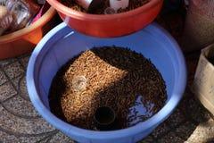 在木盆,胡志明市的蠕虫 免版税库存照片