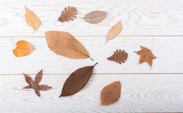 在木盘区纹理的干燥秋叶 免版税库存照片