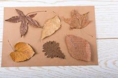 在木盘区纹理的干燥秋叶 免版税库存图片