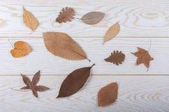 在木盘区纹理的干燥秋叶 库存图片
