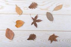 在木盘区纹理的干燥秋叶 库存照片