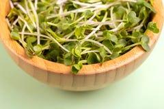 在木碗的发芽的萝卜新芽在浅绿色的背景 库存图片