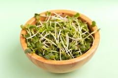 在木碗的发芽的萝卜新芽在浅绿色的背景 图库摄影
