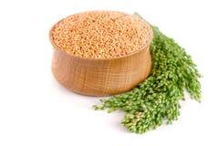 在木碗的小米有在白色背景隔绝的绿色小尖峰的 鹦鹉的食物 库存图片
