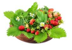 在木碗的野草莓在白色 库存图片
