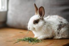 在木窗口基石的装饰白色和黑兔子 库存照片