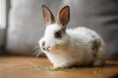 在木窗口基石的装饰白色和黑兔子 免版税库存图片