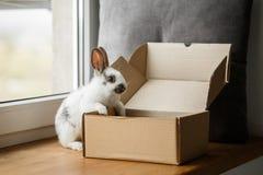 在木窗口基石的装饰白色和黑兔子 库存图片