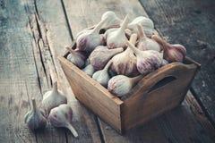 在木箱的很多大蒜在木板 免版税库存照片