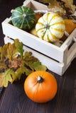 在木箱的微小的南瓜在桌上 免版税库存照片