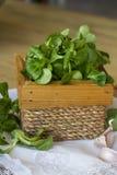 在木箱的菜用结页草 库存图片