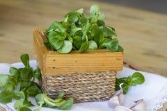 在木箱的菜用结页草 库存照片