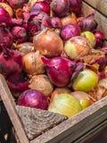 在木箱的食物葱 免版税库存照片