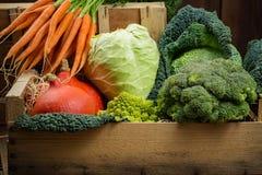 在木箱,收获的绿色和橙色新鲜蔬菜 免版税图库摄影