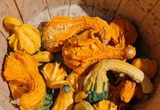 在木篮子的南瓜 图库摄影