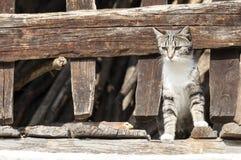 在木篱芭之间的猫 免版税库存图片