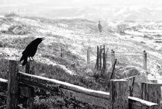 在木篱芭栖息的乌鸦 免版税库存照片