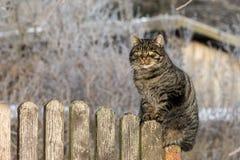 在木篱芭的猫 免版税库存照片