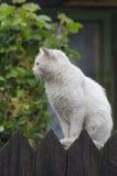 在木篱芭的猫 库存照片