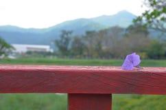 在木篱芭的紫色花有绿色山背景 库存照片