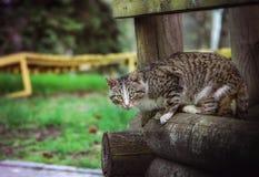 在木粱的猫 库存照片