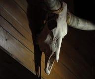 在木纹理的母牛头骨 免版税库存照片