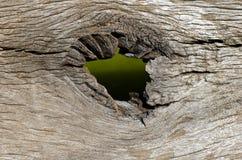 在木纹理的漏洞 免版税库存图片