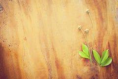 在木纹理的美丽的植物花 库存照片