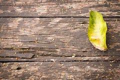在木纹理的绿色叶子 图库摄影
