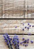 在木纹理,照片的关闭的两朵葡萄风信花花 图库摄影