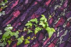在木纹理绿色叶子 免版税库存图片