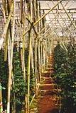 在木结构之下的温室路径 免版税库存照片