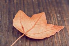 在木背景特写镜头的秋天叶子 库存照片