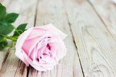 在木背景的一朵柔和的淡色彩玫瑰 图库摄影