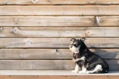 在木背景的一条逗人喜爱的狗 免版税库存图片