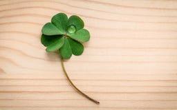 在木背景的三叶草叶子 象征性四片叶子分类 免版税库存图片