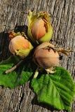 在木背景的三颗榛子 免版税库存照片