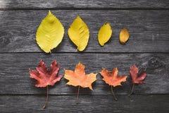 在木背景的下落的叶子 图库摄影