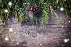 在木背景的云杉的分支 库存图片