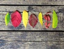 在木背景的五颜六色的叶子在秋天 库存照片