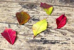 在木背景的五颜六色的叶子在秋天 库存图片