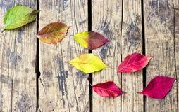在木背景的五颜六色的叶子在秋天 免版税库存图片