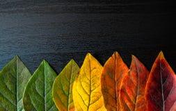 在木背景的五颜六色的叶子特写镜头 免版税图库摄影