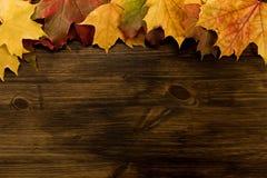 在木背景的五颜六色的槭树叶子 感恩 库存图片